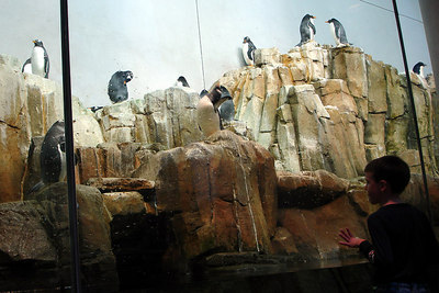 Watching the penguins at the Biodome in Olympic Park - Montreal, QC ... October 8, 2006 ... Photo by Rob Page III