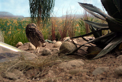 A roadrunner at the Biodome in Olympic Park - Montreal, QC ... October 8, 2006 ... Photo by Rob Page III