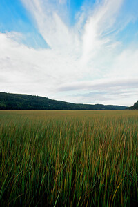 Cape Enrage.  Shepody Marsh.