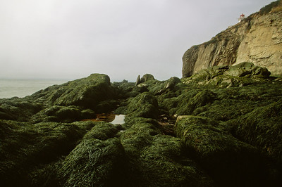 Cape Enrage shoreline at low tide