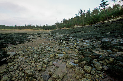 Coastal rocks at low tide