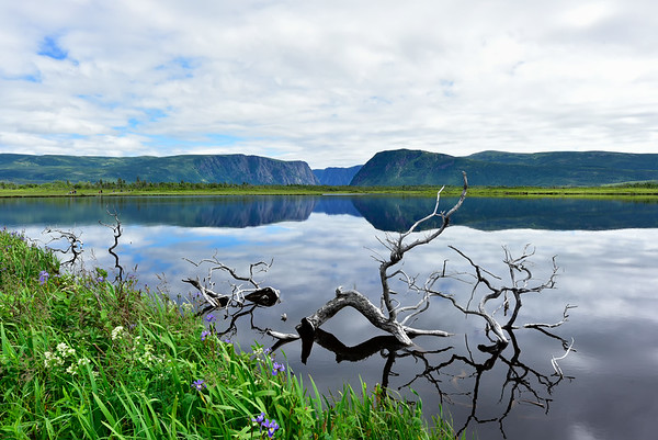 Western Brook Pond and logs
