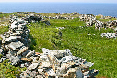 The Stone fences of Grates Cove, Newfoundland
