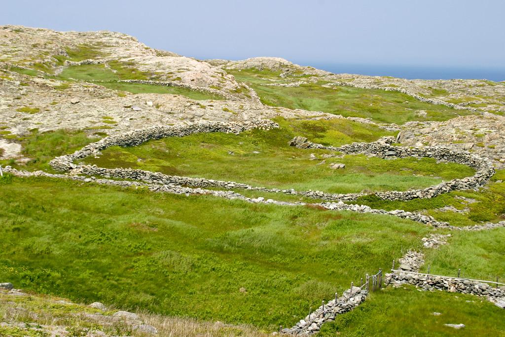 The Stone fences of Grates Cove, Newfoundland