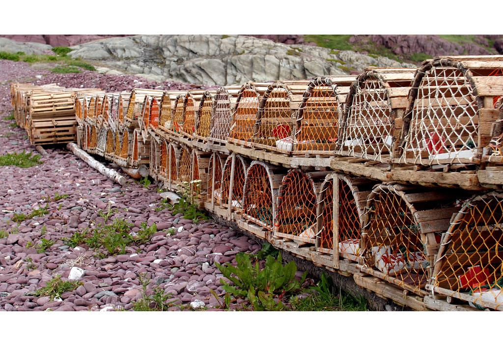 Lobster traps lined up at Tickle cove, newfoundland
