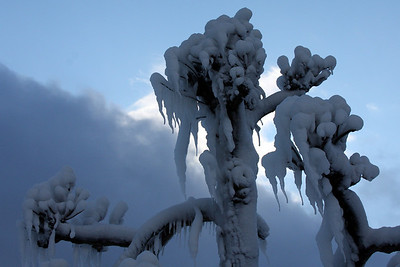 One of the forzen trees - Niagara Falls, ON ... December 22, 2008 ... Photo by Rob Page III
