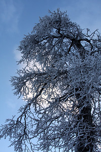 One of the frozen trees near the Falls - Niagara Falls, ON ... December 22, 2008 ... Photo by Rob Page III