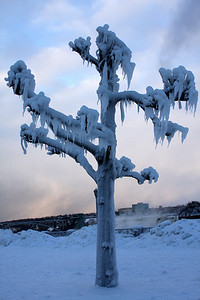 Frozen Tree - Niagara Falls, ON ... December 22, 2008 ... Photo by Rob Page III