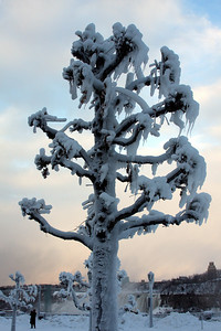 One of the frozen trees - Niagara Falls, ON ... December 22, 2008 ... Photo by Rob Page III