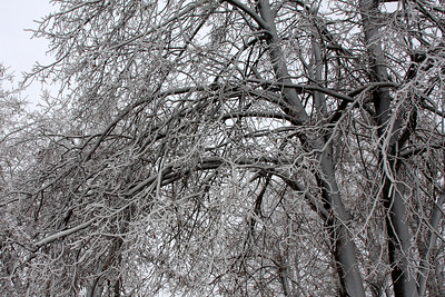 Frozen trees - Niagara Falls, NY ... December 23, 2008 ... Photo by Rob Page III