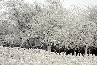 A winter wonderland - Niagara Falls, NY ... December 23, 2008 ... Photo by Rob Page III
