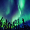 Northern Lights and forest close to Yellownife, NWT