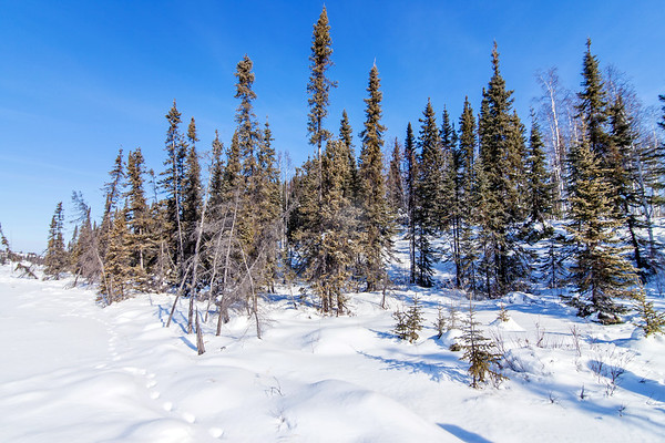 Forest at Vee Lake near Yellowknife