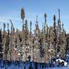 Prelude Lake Territorial Park 23