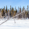 Nature at Vee Lake close to Yellowknife in Winter