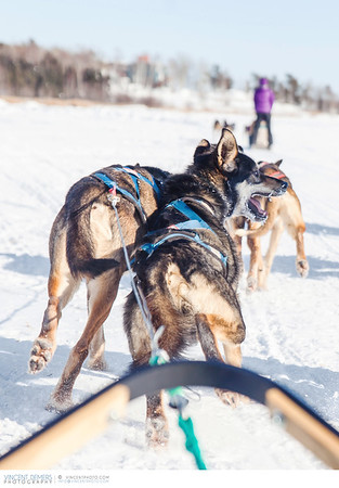Dogsledding in Yellowknife