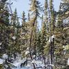 Yellowknife-VD-0185