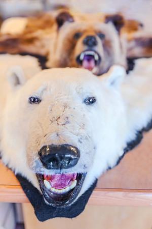 Bear rugs in a store / Peaux d'animaux dans un magasin
