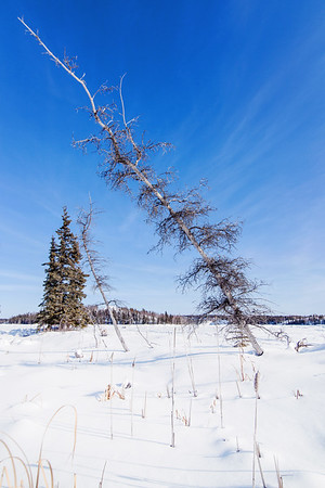 Nature at Vee Lake close to Yellowknife