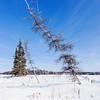 Nature at Vee Lake close to Yellowknife