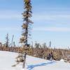 Prelude Lake Territorial Park 10