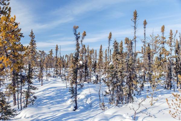 Prelude Lake Territorial Park 5