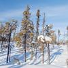 Prelude Lake Territorial Park 6