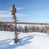 Prelude Lake Territorial Park 18
