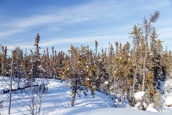 Prelude Lake Territorial Park 3