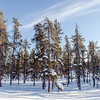 Prelude Lake Territorial Park 28