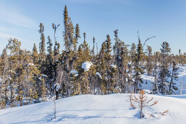Prelude Lake Territorial Park 12