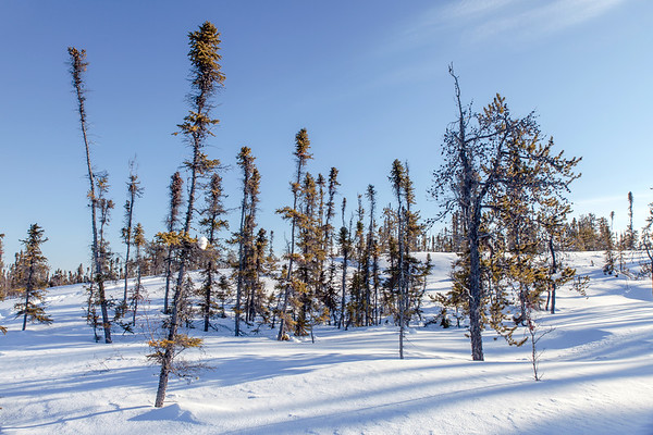 Prelude Lake Territorial Park 27