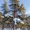 Prelude Lake Territorial Park 30