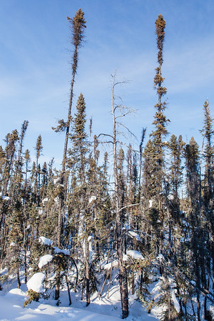 Prelude Lake Territorial Park 13