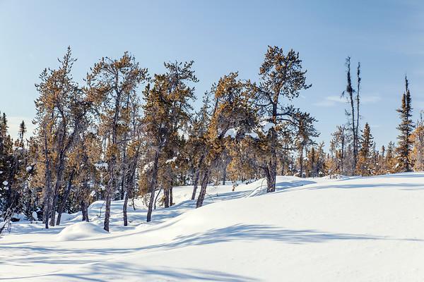 Prelude Lake Territorial Park 8