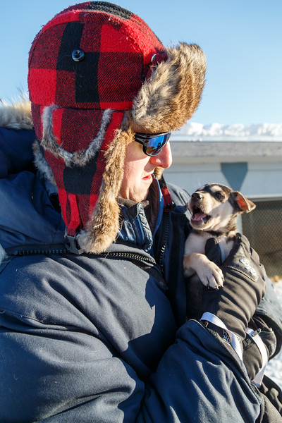 Yellowknife, Town - Sled dog puppy being held by a person