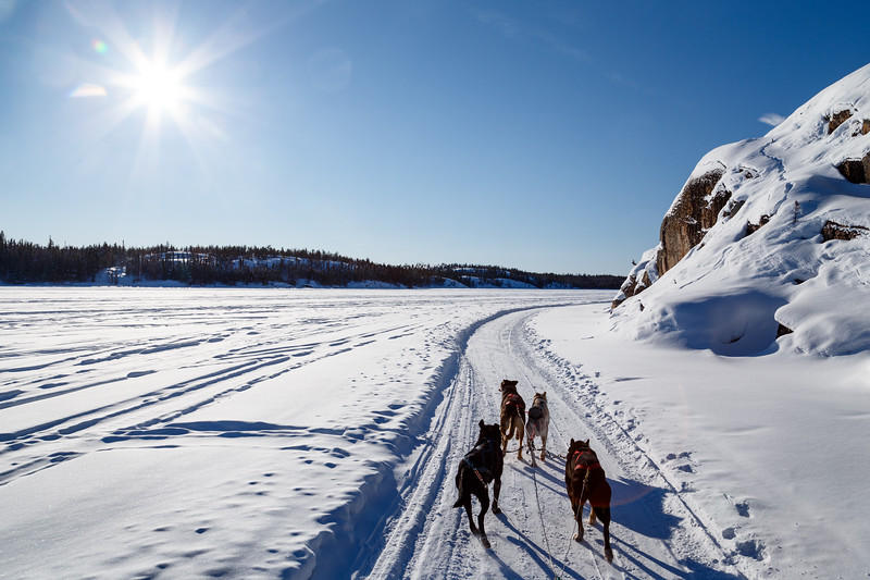 Yellowknife, Town - Sled dogs leading a team across a frozen lake in the sunshine