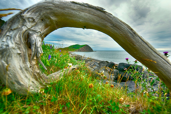 Rock through Driftwood HDR