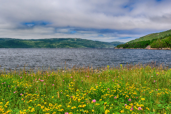 Wildflowers and Gros Morne and water