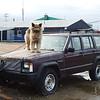 Friendly Iqaluit guard-dog
