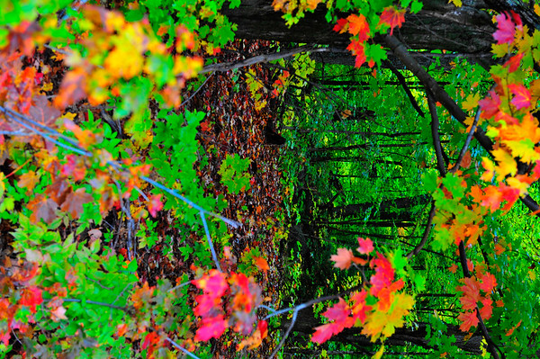 Circular colors to forest