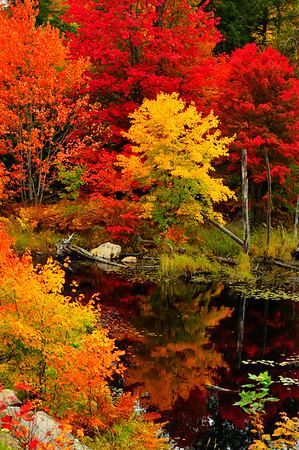 Vertical of swamp and vivid colors