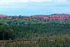 Overlooking the forest of algonquin