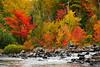 Vivid foliage at rivers end