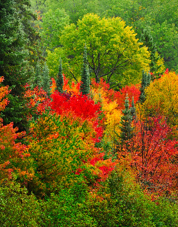 Vibrant colors on sunday morning in Opeongo