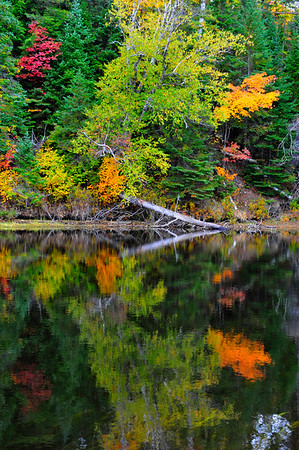 Vertical Reflection