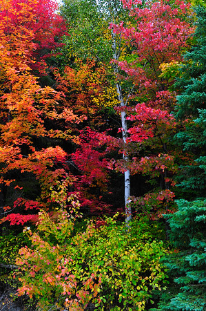 Explosion of colors with Birch