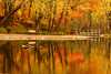 St  John's Conservation Area in Full Fall color - October