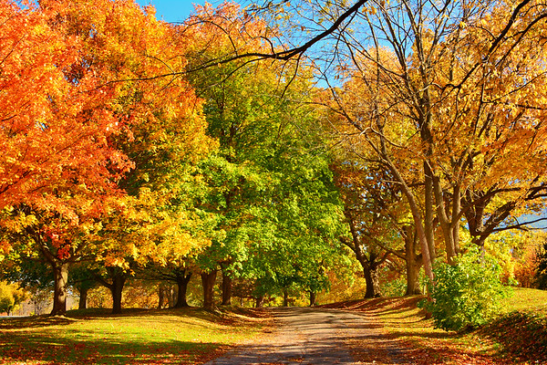 Gorgeous Fall Colors in NOTL - September