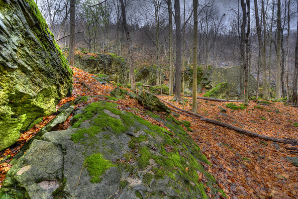 Rocks and forest in Niagara Glen